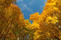 валы лужка листьев берез осени померанцовые стоковые фотографии rf