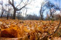валы лужка листьев берез осени померанцовые Стоковые Фото