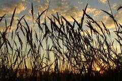 валы утра лужка травы заморозка ольшаника Стоковое Фото