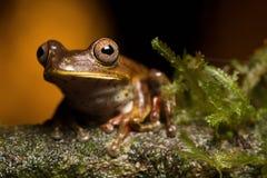 вал лягушки тропический Стоковая Фотография RF