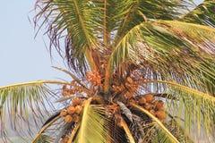 вал tailand ладони природы кокосов Стоковое фото RF