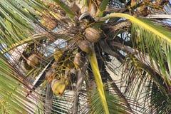 вал tailand ладони природы кокосов Стоковые Фотографии RF