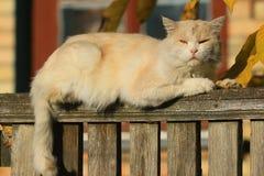 Вверху деревянная загородка лежат милый бежевый кот на фоне дома в деревне и взгляды на фотографе стоковые изображения rf