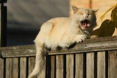 Вверху деревянная загородка лежат милый бежевый кот с открытым ртом и длинный язык на фоне деревни ho стоковые изображения rf