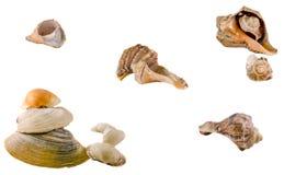Вверх изолированные раковины покрашенные морем, конец, белая предпосылка Стоковое Изображение RF