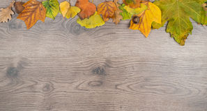 Вверх или вниз покрашенной рамки листьев Стоковое Фото