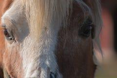 Вверх-конец лошади Стоковые Изображения RF