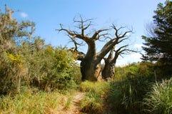 Вверх ногами дерево Стоковая Фотография