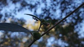 Вверх ногами муравей Стоковые Фотографии RF