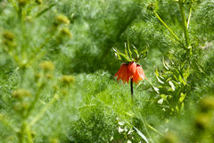 Вверх ногами цветок Стоковая Фотография RF