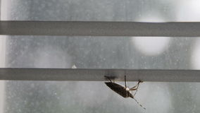 Вверх ногами черепашка вони чистая оно антенны ` s на видах pentatomoidea шторок окна сток-видео