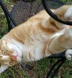 Вверх ногами шальной наблюданный кот Стоковое фото RF