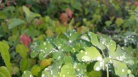 Вверх по близким листьям стоковые фотографии rf