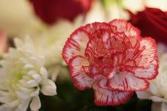 Вверх по близкой малой глубине цветка поля Стоковое фото RF
