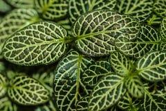 Вверх по близкому зеленому цвету Стоковое Изображение