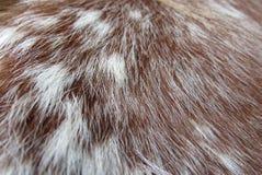 Вверх по близкому снимку волос лошади Стоковое Фото