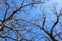Вверх по взгляду деревьев в ясном солнечном дне стоковое фото rf