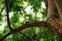 Вверх по на дереву стоковые изображения rf