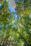 Вверх по поднимающему вверх и прочь Стоковые Фото