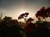 вверх по просыпать Стоковая Фотография