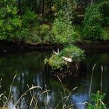 Вдоль банков реки Duwamish, Сиэтл, штат Вашингтон стоковые изображения