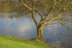 вдоль вала озера Стоковое фото RF