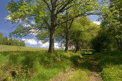 вдоль зеленого путя лужка Стоковая Фотография RF