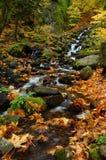 вдоль листьев заводи стоковая фотография rf