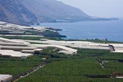 вдоль плантаций palma la свободного полета банана Стоковые Фото