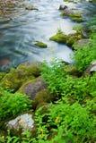 вдоль покрытых утесов мха спешя поток Стоковые Изображения