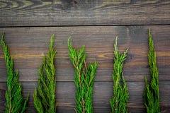 вдоль предпосылки ветви carpeting создающ земной можжевельник впечатления перемещают Можжевельник разветвляет на темном деревянно стоковое изображение rf