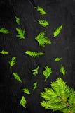 вдоль предпосылки ветви carpeting создающ земной можжевельник впечатления перемещают Можжевельник разветвляет на черном космосе э стоковая фотография rf