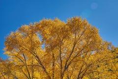 вдоль пропуска kebler осени Стоковая Фотография RF