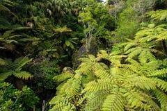 вдоль реки lush джунглей Стоковое Фото