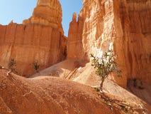 вдоль тропки peekaboo каньона bryce Стоковые Фотографии RF
