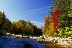 вдоль цветов Fall River Стоковые Изображения