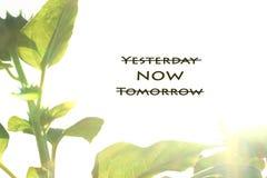 Вдохновляющий закавычьте забудьте вчера, живите в теперь, забудьте завтра стоковые изображения rf