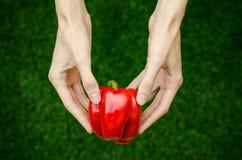 Вегетарианцы и свежий фрукт и овощ на природе темы: человеческая рука держа красный пеец на предпосылке зеленого gr Стоковые Фото