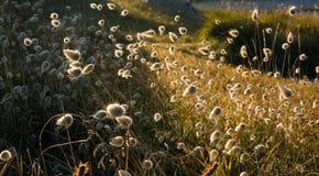 вегетация взморья Стоковая Фотография RF