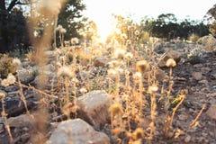 Вегетация в национальном парке гранд-каньона Стоковая Фотография RF