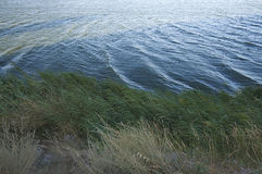 Вегетация вдоль озера стоковые изображения rf