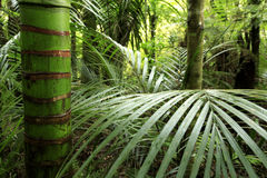 вегетация джунглей тропическая стоковое изображение rf
