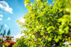 Вегетация лета в саде стоковая фотография rf