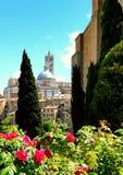 Вегетация и архитектура в Сиене, Тоскане, Италии Стоковое Изображение RF