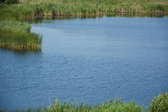 Вегетация и вода перепада стоковые изображения rf