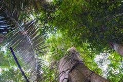 Вегетация леса джунглей Стоковые Изображения