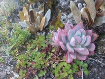 Вегетация на больше чем 4000 метрах Стоковое Изображение