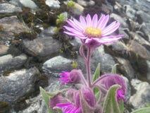 Вегетация на больше чем 4000 метрах Стоковые Фотографии RF