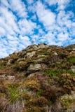 Вегетация на падении лета стены горы стоковые изображения