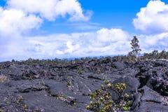 Вегетация на поле лавы в большом острове, Гаваи Стоковая Фотография RF